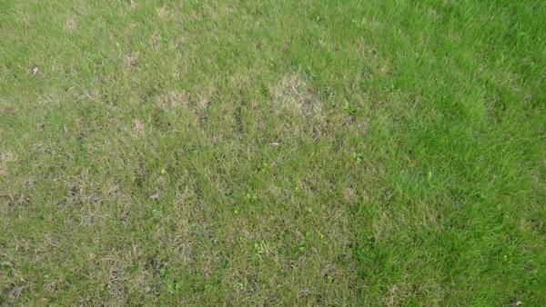 6. Péče o trávník v letních měsících