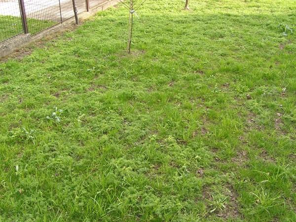 17. Ostatní faktory mající vliv na kvalitu trávníků