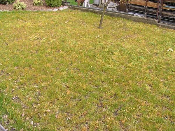 3. Zakládání trávníků