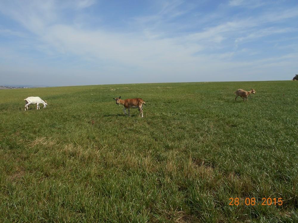 Pastevní směs 1 - RANÁ