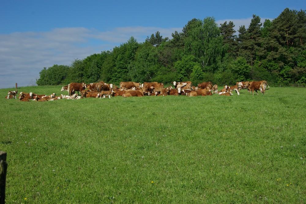 Pastevní směs 3 – POLOPOZDNÍ až POZDNÍ